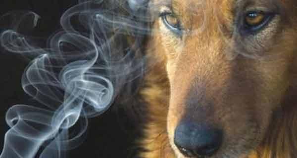 Giornata mondiale senza tabacco, il fumo uccide anche i pets